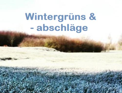 Wintergrüns & Winterabschläge ab dem 27.12.2018